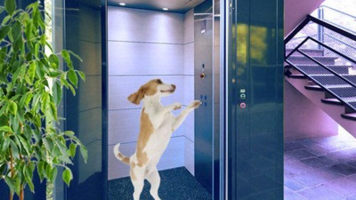 Animali in condominio. Norme per gli animali in ascensore: può il regolamento condominiale vietarne l'uso?