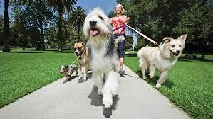 Morso di cane responsabilità: si può condannare il proprietario di un cane che esce dal recinto e aggredisce i passanti?